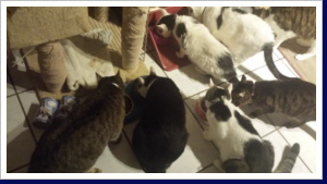 KatzenOpa Neues Futter Pemium Huhn mit Leiöl Probeessen