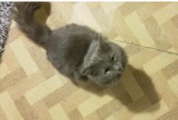 Grauchen 1 KatzenOpa